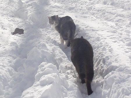 雪の中のお散歩 その25