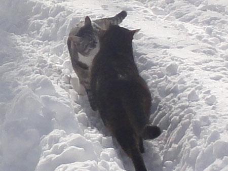 雪の中のお散歩 その26