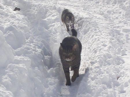 雪の中のお散歩 その27