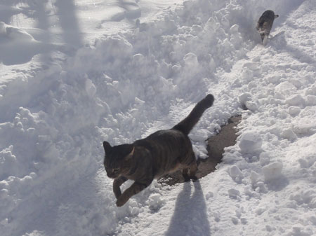 雪の中のお散歩 その29