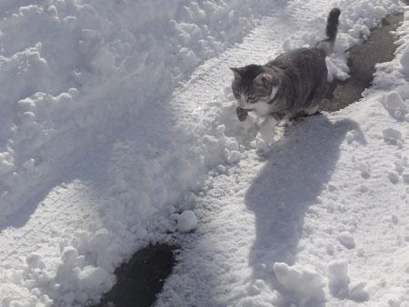 雪の中のお散歩 その210