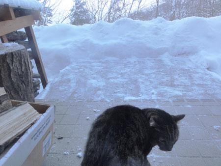 またまた雪が5