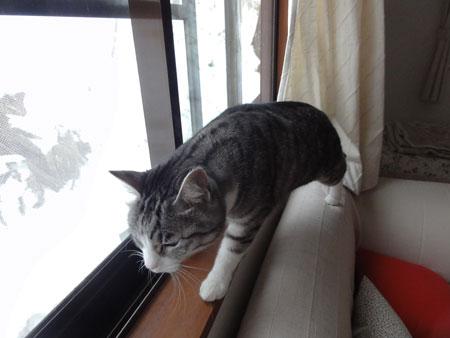 ゲストルームの窓から1