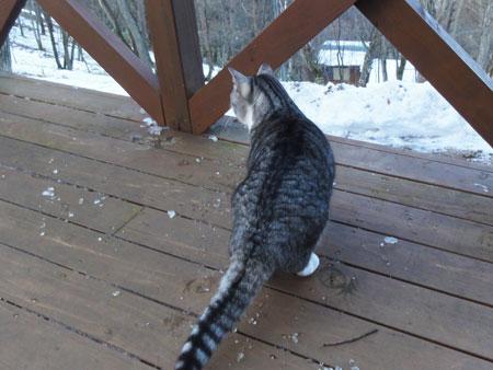 雪が融けて1