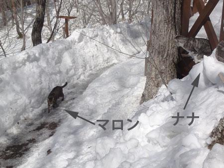 雪掻きをする前に1