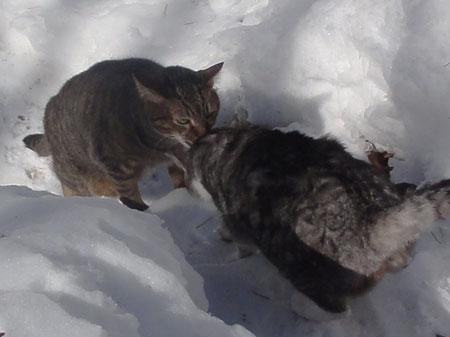 雪掻きをする前に3
