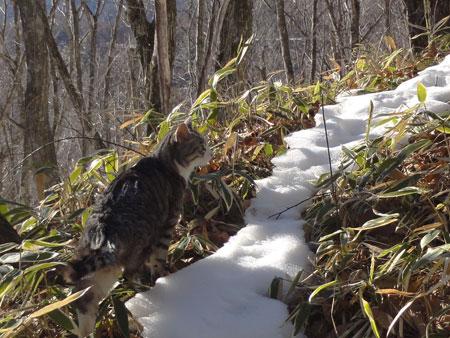 冬の登山道7
