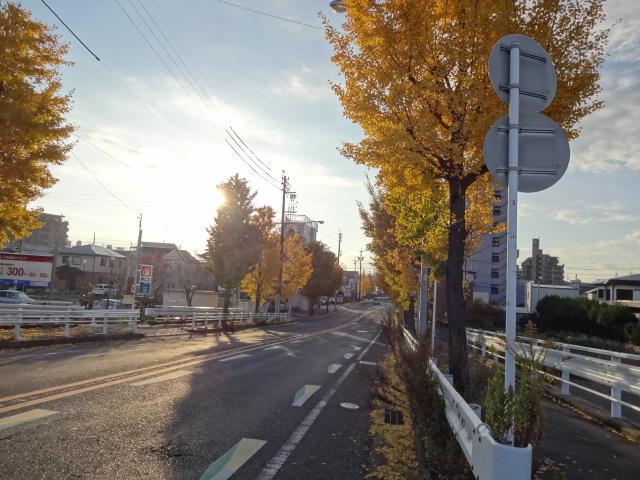 途中の銀杏並木
