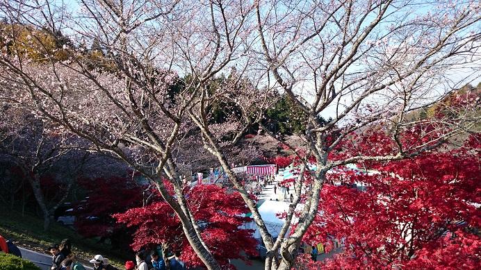 小原 四季桜祭 ふれあい公園