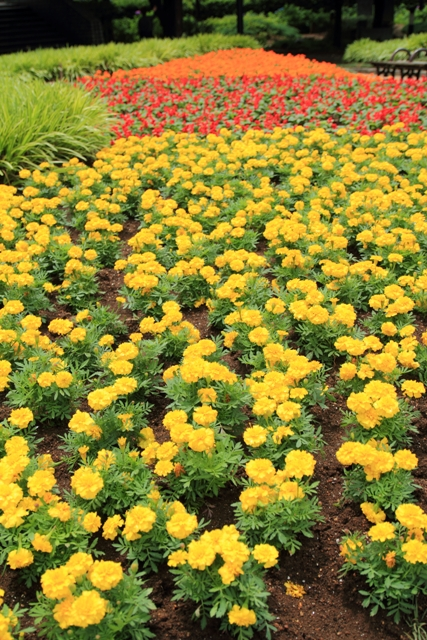 西公園花壇