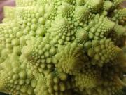 Cauliflower Romanesco4