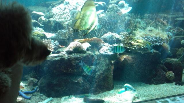 りょう 水族館