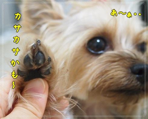 1_20120920232454.jpg