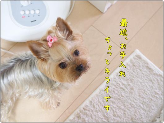 P1013519_convert_20120612213810.jpg
