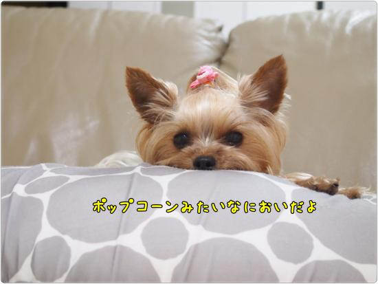 P1013614_convert_20120621223748.jpg