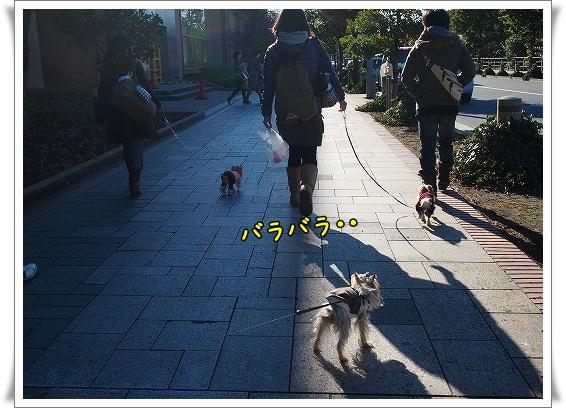 P1270673.jpg