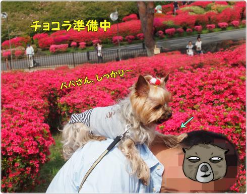 P4298790_convert_20120507224157.jpg
