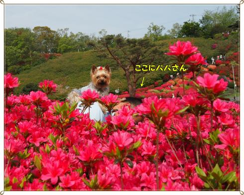 P4298793_convert_20120507224723.jpg