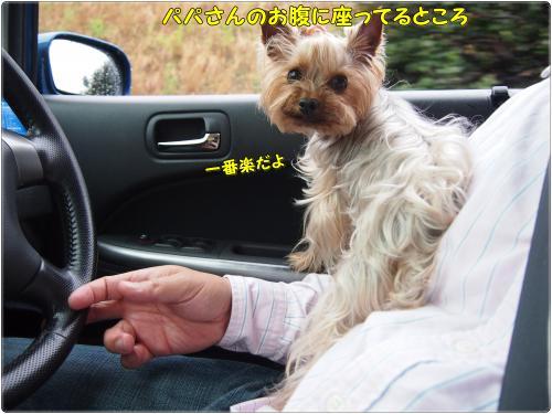 P5039509_convert_20120503235635.jpg