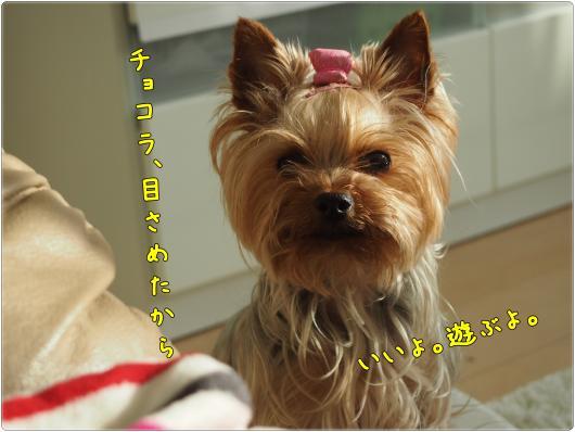 P5120279_convert_20120513184500.jpg