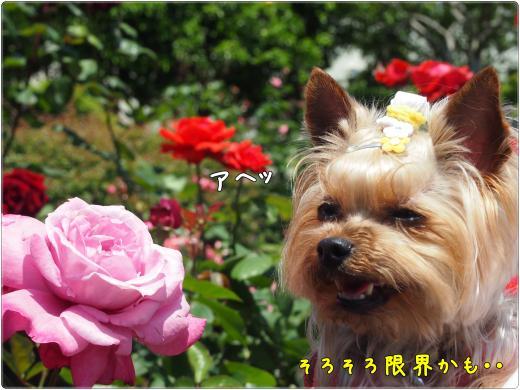 P5191051_convert_20120522214438.jpg