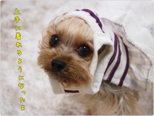 P5251711_convert_20120525203329.jpg