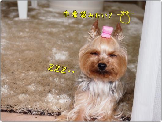 P5261797_convert_20120530205259_20120530205355.jpg
