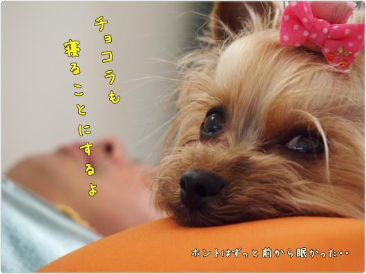 P5272136_convert_20120527220229.jpg