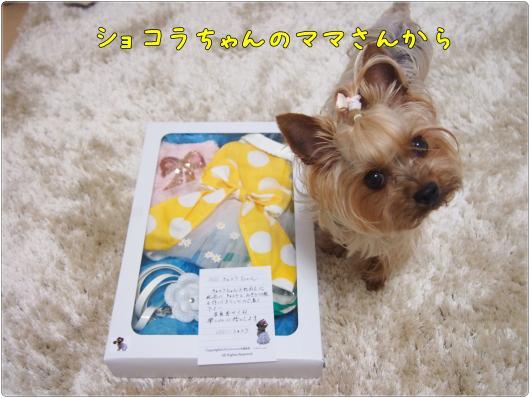 P6022750_convert_20120603201612.jpg