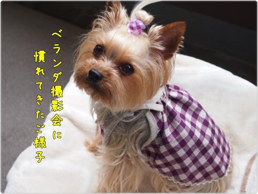 P6032834_convert_20120603213032.jpg
