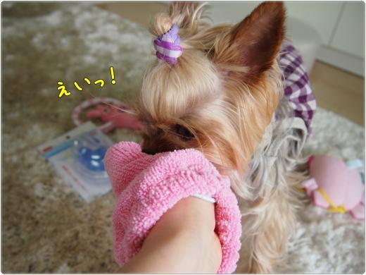 P6032843_convert_20120603213723.jpg