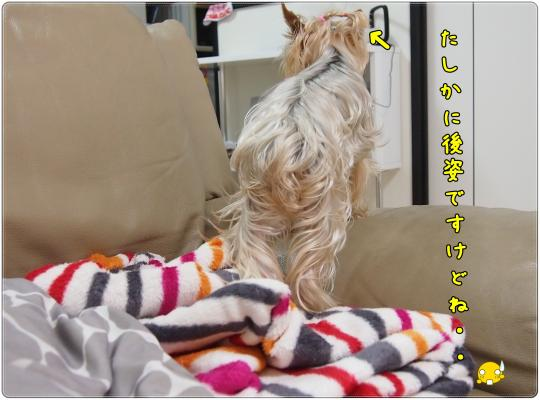 P6133908_convert_20120615221352.jpg