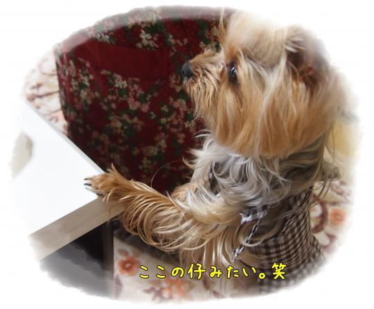 P6154105_convert_20120616223907.jpg
