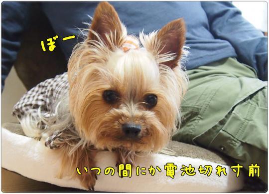 P6154156_convert_20120616230139.jpg