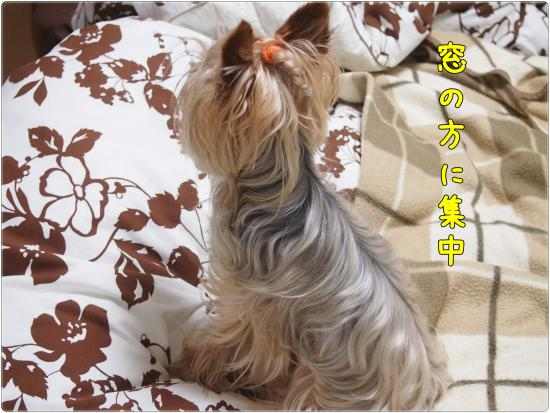P6174201_convert_20120617220631.jpg