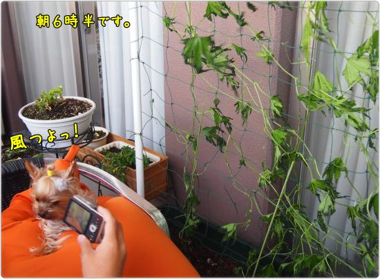 P6204587_convert_20120620214233.jpg