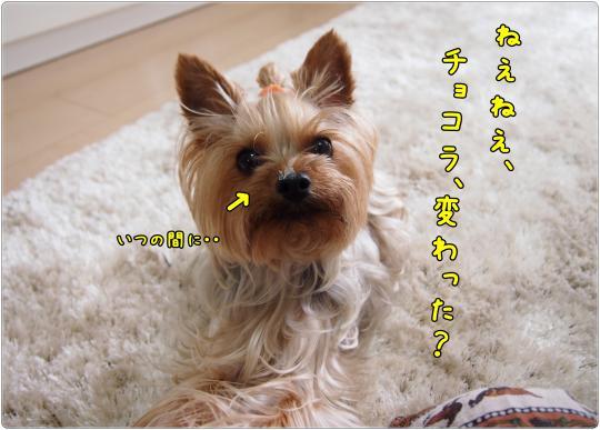 P6234981_convert_20120626225632.jpg