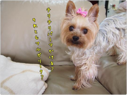P6235069_convert_20120624230029.jpg