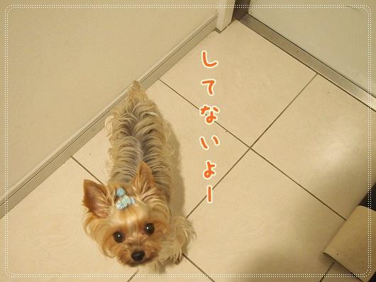 P7197064.jpg