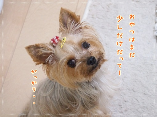 P8079389_20120807223255.jpg