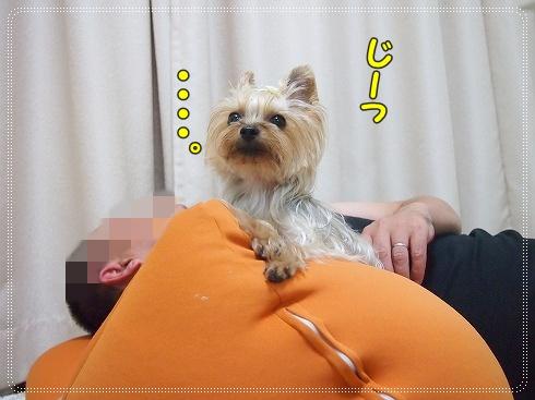 P9111228_20120913234435.jpg