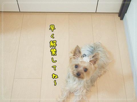 PA022757_20121003234657.jpg