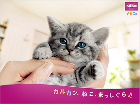 KalKan_kitten_052612