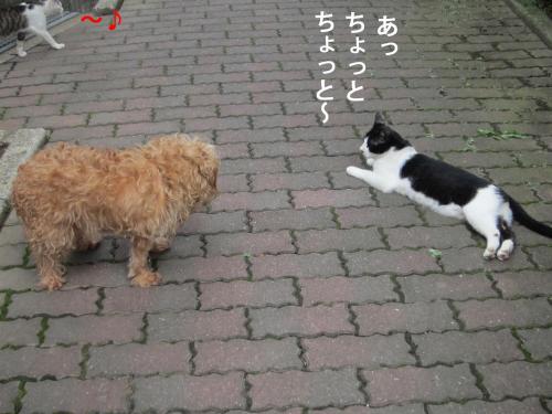 0-2_convert_20121006160950.jpg