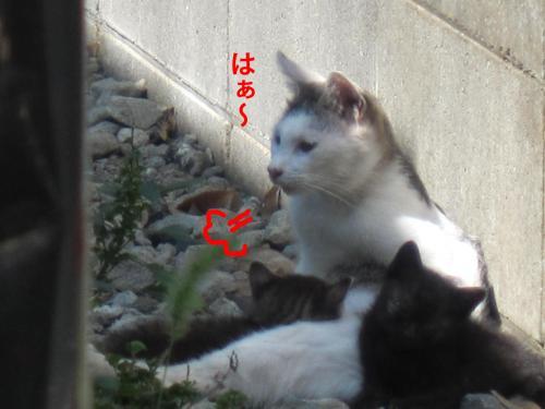 0-9_convert_20121007155800.jpg