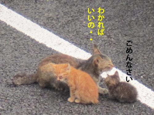 00_convert_20120809103908.jpg