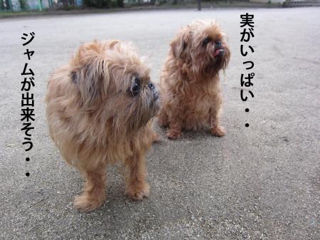 07_convert_20120627114603.jpg