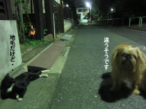 07_convert_20121004144004.jpg