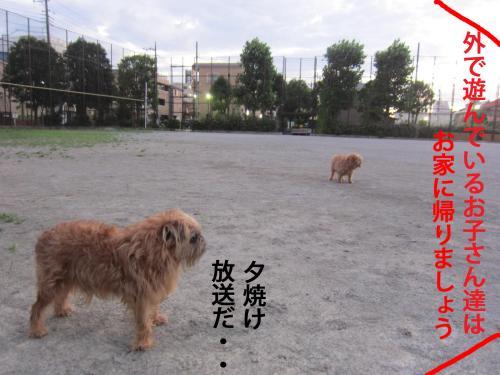 100_convert_20120727134636.jpg