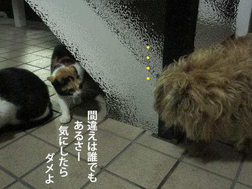 10_convert_20120924175723.jpg